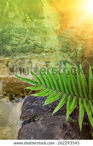 portrait format of a fern leaf frond overhanging the waters edge with tranquil mood and colors bright sunny reflection and light shining through the scene - stock photo