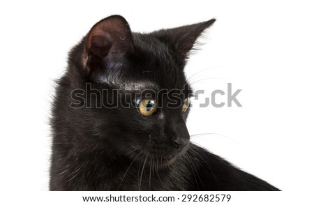 portrait (head) of black cat - stock photo