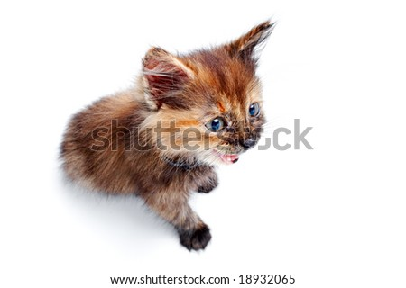 portrait nice small kitty isolated on white background