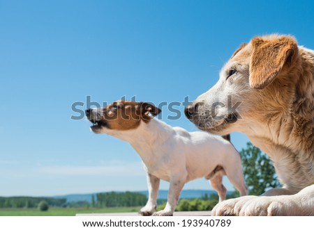 portrait of a barking dogs - stock photo
