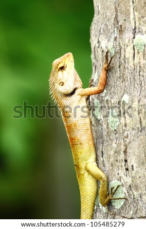 portrait of a bearded dragon on the tree