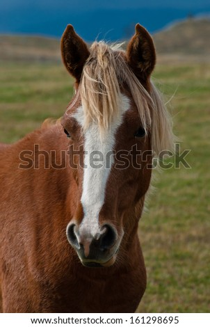 Portrait of a beautiful brown horse - stock photo
