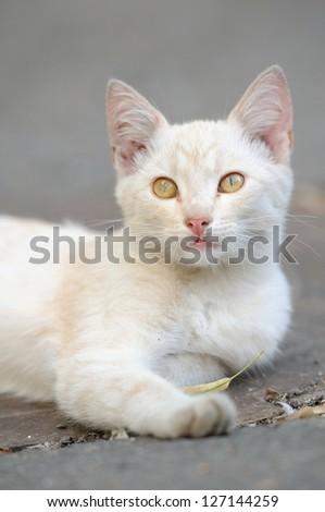 Portrait of a beautiful cat cute adorable kitten - stock photo