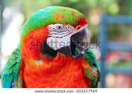 Portrait of a beautiful colorful Macaw parrot close-up - stock photo