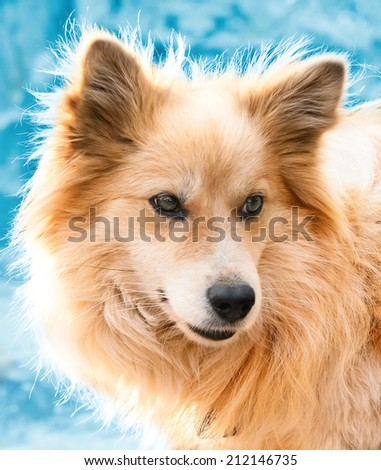 Portrait of a beautiful dog in winter - stock photo