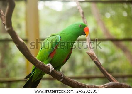 Portrait of a beautiful green parrot
