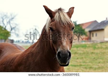 Portrait of a beautiful horse - stock photo