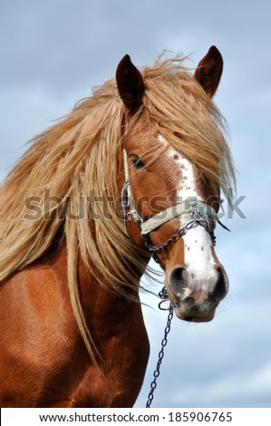 Portrait of a beautiful horse with blonde mane - stock photo