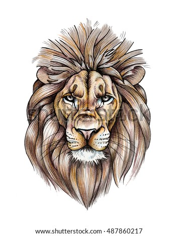 Portrait of a beautiful lion color pencil drawing