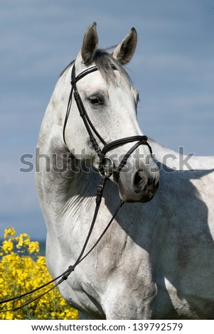 Portrait of a beautiful roan mare in flowering field