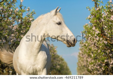 Portrait of a beautiful white horse.