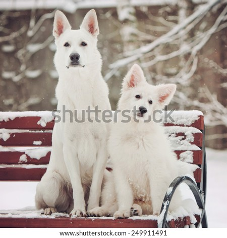 portrait of a Big Shepherd and a cute little puppy in the snow - stock photo