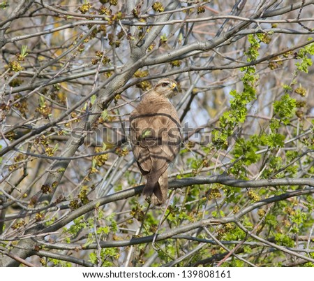 Portrait of a bird of prey on a tree branch