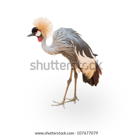 Portrait of a bird on white background