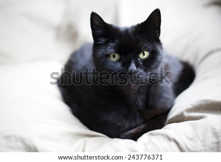 Portrait of a black cat - stock photo
