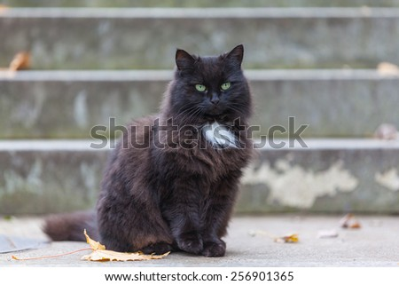 Portrait of a black cat woth yellow eyes - stock photo