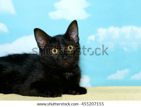 portrait of a black tabby kitten laying on a yellow blanket looking off to the side, hopeful for a forever home. Blue background with white clouds, copy space - stock photo
