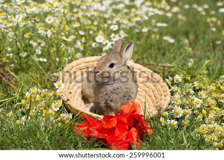 Portrait of a bunny on basket in the meadow
