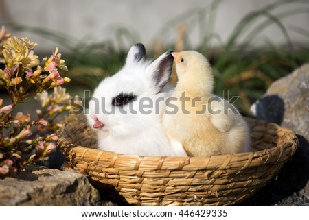 Portrait of a bunny with a chick in a basket in the garden