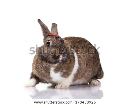 portrait of a bunny with small red bow on white background