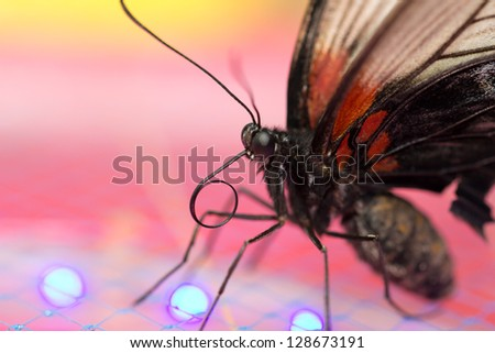 Portrait of a butterfly, macro