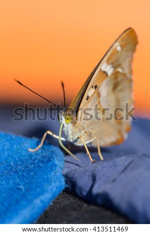 Portrait of a butterfly with yellow eyes closeup - stock photo