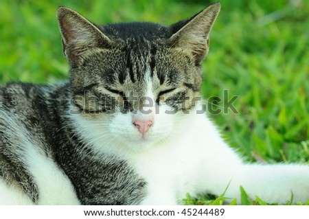 Portrait Of A Cat - stock photo