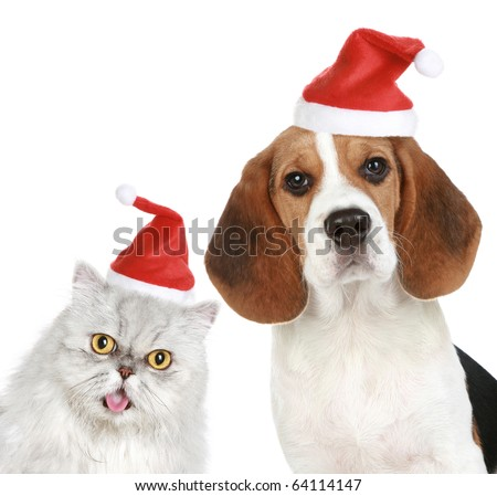 Portrait of a cat and dog in red Christmas hats. Isolated on a white background
