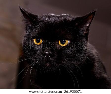 Portrait of a cat close-up - stock photo
