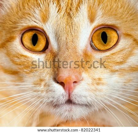 Portrait of a cat close up - stock photo
