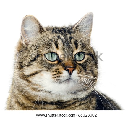 Portrait of a cat close up it (is isolated) - stock photo