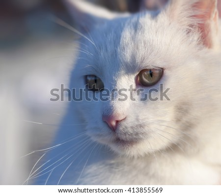 Portrait of a cat having a rest on a sunny day