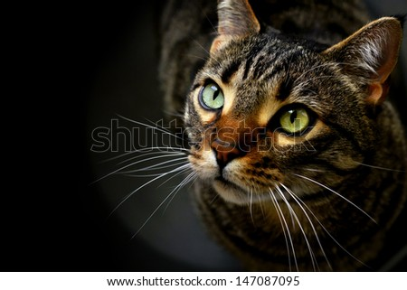 Portrait of a cat on black - stock photo
