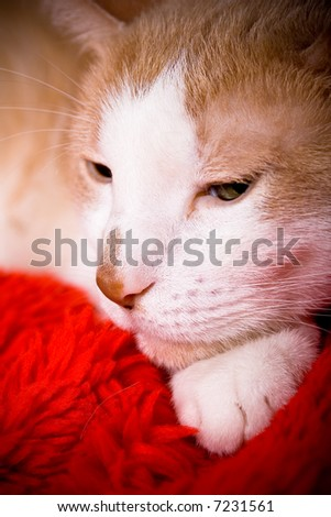 Portrait of a cat sleeping - stock photo