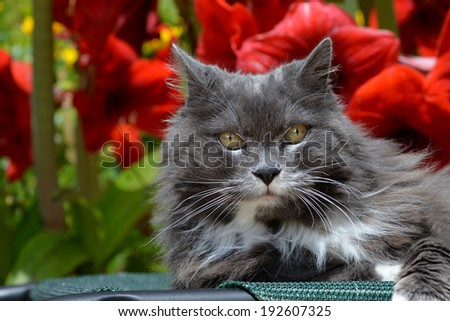 Portrait of a cat staring at camera/Happy cat/ - stock photo