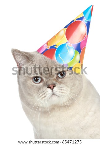Portrait of a cat with party hat on a white background - stock photo