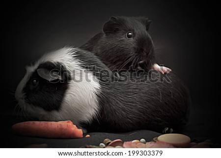 Portrait of a cheerful guinea pig - stock photo