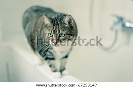 Portrait of a common european house cat in bathroom - stock photo