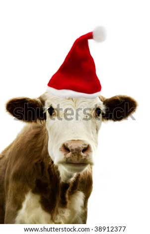 Portrait of a cow wearing a christmas hat. - stock photo