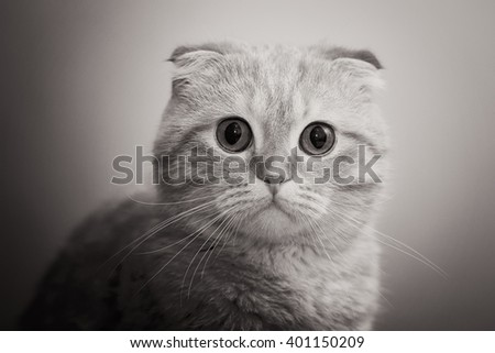 Portrait of a curious cat. Cat looking at the camera (b&w) - stock photo