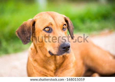 Portrait of a cute dog in Suriname