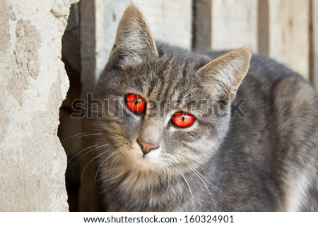 Portrait of a cute gray cat. His eyes are as red as horror or vampire - stock photo