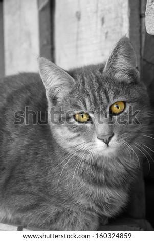 Portrait of a cute gray kitten - stock photo