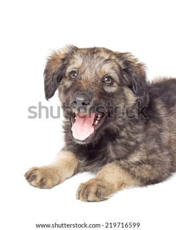 portrait of a cute puppy isolated on white background