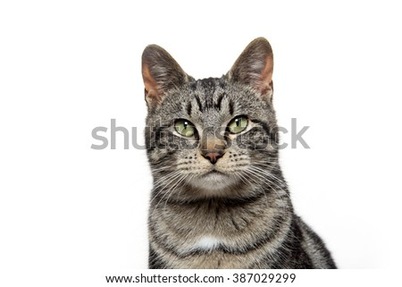 Portrait of a cute tabby cat isolated on white background - stock photo