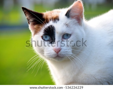 Portrait of a cute white cat