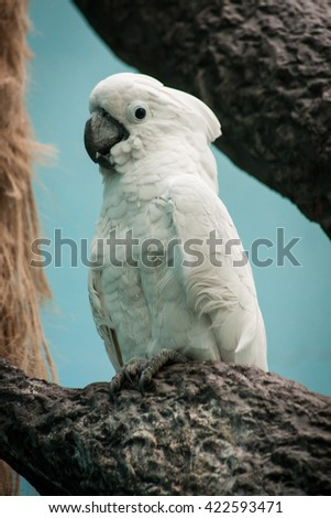 Portrait of a cute white cockatoo sitting on a branch