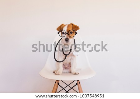 Portrait of a cute young small dog sitting on a white modern chair. Wearing stethoscope and glasses. He looks like a doctor or a vet. Home, indoors or studio. White background.