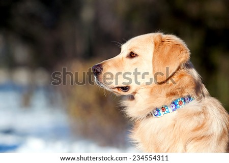 portrait of a dog - stock photo