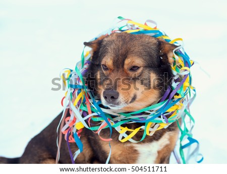 Portrait of a dog entangled in colorful streamer. Dog walking in the snow outdoor